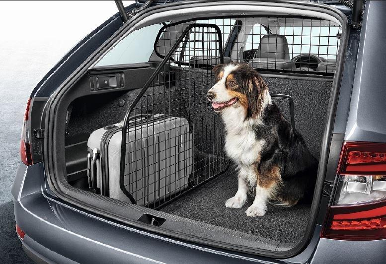 rete auto cani