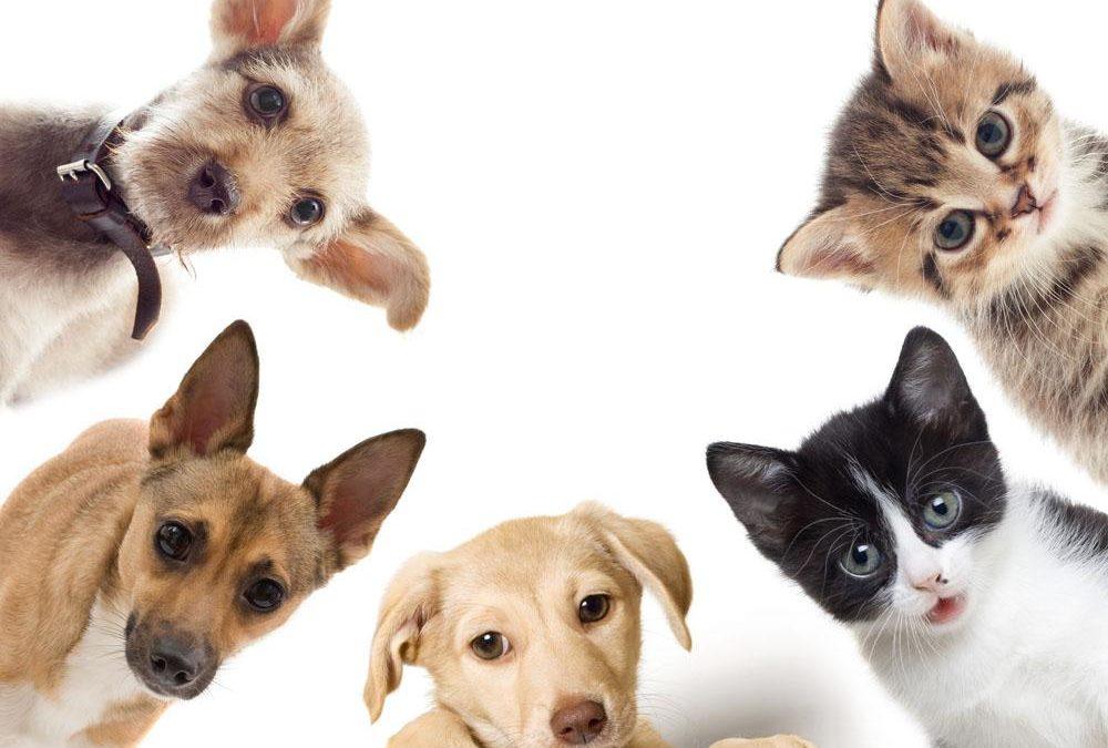 antiparassitari cani