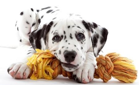 giochi cane