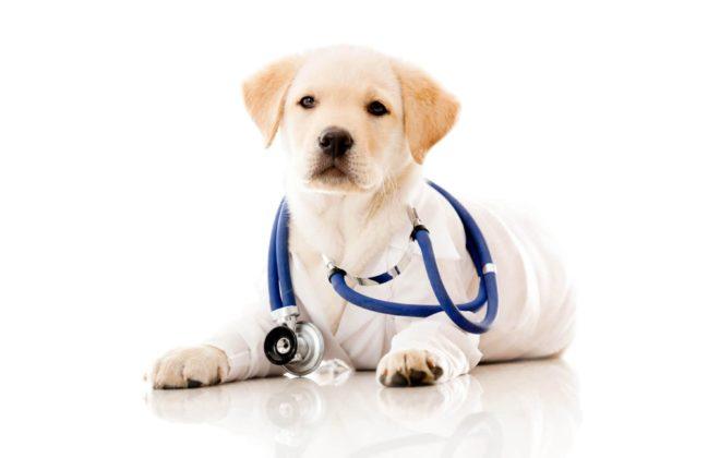 vaccinazione cane