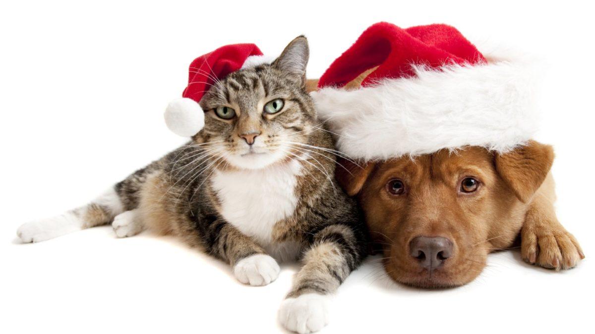Natale animali