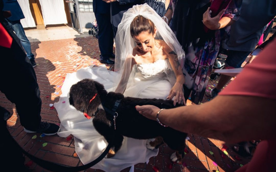 wedding dog sitter durante cerimonia