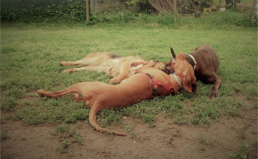 Foto Cani che mordono: tre cani che mordono